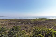 Natürliche Sumpfgebiet-Vegetation an See-St. Lucia South Africa lizenzfreie stockbilder