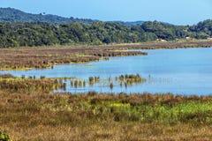 Natürliche Sumpfgebiet-Vegetation an See-St. Lucia South Africa stockfotos