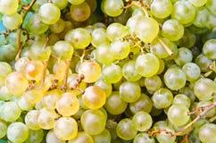 Natürliche Trauben stockfotos