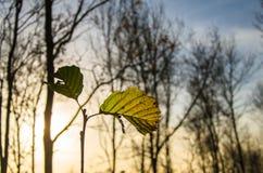 Natürliche und unvollständige Blätter Stockfoto