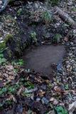 Natürliche Untertagequellwasserquelle im wilden Wald stockfotografie