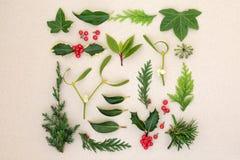 Natürliche Winter-Blätter und Holly Berries lizenzfreie stockfotos