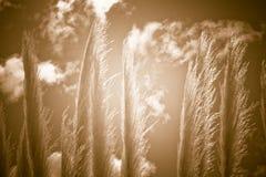 Natürlicher abstrakter Reedhintergrund Stockfotografie
