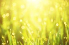 Natürlicher abstrakter sonniger Hintergrund Stockbild
