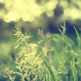 Natürlicher abstrakter sonniger Hintergrund Stockbilder