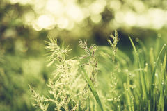Natürlicher abstrakter sonniger Hintergrund Stockfotografie