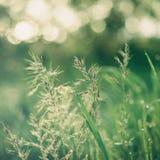 Natürlicher abstrakter sonniger Hintergrund Stockfotos