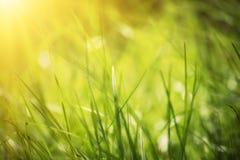 Natürlicher abstrakter sonniger Hintergrund Stockfoto