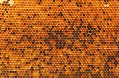 Natürlicher Beebread in den Bienenwaben Stockbild