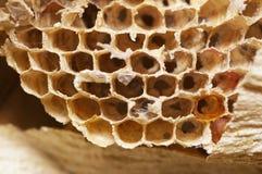 Natürlicher Bienenbienenstock Stockbild