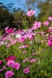 Natürlicher Blumenhintergrund Erstaunliche Naturansicht von purpurroten Blumen Stockfotografie