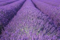 Natürlicher Blumenlavendelhintergrund, ultraviolettes Konzept - Farbe des Jahres 2018 Lizenzfreie Stockfotografie