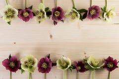 Natürlicher Blumenrahmenhintergrund mit lenten rosafarbenen Blumen des Hellebore über Holz Lizenzfreies Stockbild