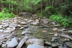 Natürlicher Fluss in einem luxuriösen Wald lizenzfreie stockbilder