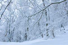 Natürlicher foreat Bereich im Harz im Winter stockfotografie