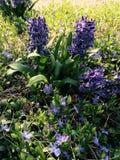 Natürlicher Frühling Stockfotografie