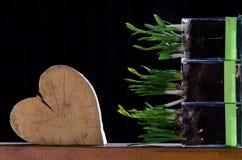 Natürlicher Frühlings-Liebe Stockbilder