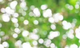 Natürlicher grüner Bokeh-Unschärfe-Hintergrund Stockfotos