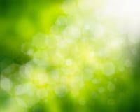 Natürlicher grüner Hintergrund Lizenzfreie Stockbilder