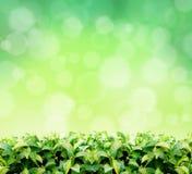 Natürlicher grüner Hintergrund Lizenzfreies Stockbild