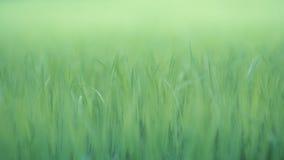 Natürlicher grüner Hintergrund Stockbilder