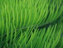Natürlicher grüner Hintergrund Lizenzfreie Stockfotos