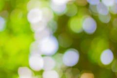 Natürlicher grüner Hintergrund mit bokeh Lizenzfreies Stockbild