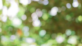 Natürlicher grüner Hintergrund mit bokeh Lizenzfreies Stockfoto