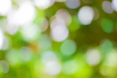 Natürlicher grüner Hintergrund mit bokeh Stockbilder