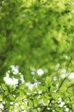 Natürlicher grüner Hintergrund mit Lindenblättern Lizenzfreies Stockfoto