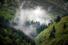 Natürlicher grüner nebeliger Wald Stockfotos