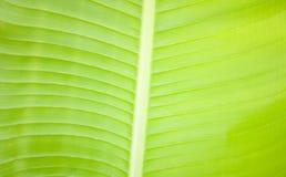 Natürlicher grüner und gelber Hintergrund Lizenzfreies Stockbild