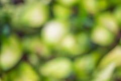 Natürlicher grüner unscharfer Hintergrund Stockbild