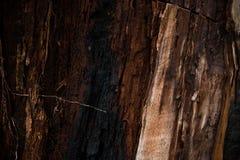 Natürlicher hölzerner Hintergrund des Kastanienbaums brannte durch Blitz Stockbilder