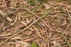 Natürlicher Hintergrund der Grundnahaufnahmeansicht Waldgrundbeschaffenheit abstrakte Hintergrundbeschaffenheit des Holzspans lizenzfreie stockfotografie