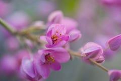 Natürlicher Hintergrund der rosa Blume stockbild