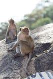 Natürlicher Hintergrund des Affen Stockbilder