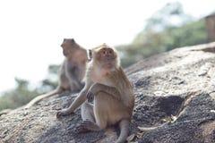 Natürlicher Hintergrund des Affen Lizenzfreies Stockbild