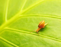 Natürlicher Hintergrund des grünen Blattes Stockbilder