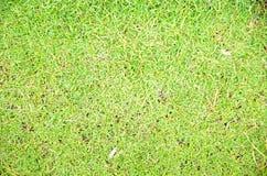 Natürlicher Hintergrund des grünen Grases Lizenzfreie Stockbilder