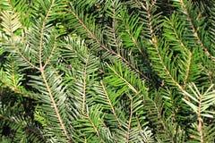 Natürlicher Hintergrund des Weihnachtsbaum-Stammes Stockfotos