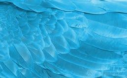 Natürlicher Hintergrund eines Fragments der Flügelfedern einer Papageiennahaufnahme der blauen Farbe Lizenzfreies Stockfoto
