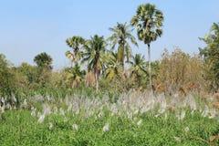 Natürlicher Hintergrund: landwirtschaftliche Wiesenszene Lizenzfreies Stockbild