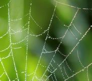 Natürlicher Hintergrund mit einem Spinnennetz und -tropfen Lizenzfreie Stockfotografie
