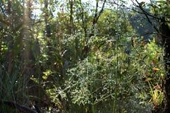 Natürlicher Hintergrund mit Forstpflanzen und Tau stockfotografie
