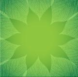 Natürlicher Hintergrund mit grünem Blatt Stockbilder