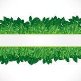 Natürlicher Hintergrund mit grünen Blättern. Stockfotos
