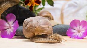 Natürlicher Hintergrund mit zwei rosa Blumen und eine Schnecke auf einer Holzoberfläche Lizenzfreies Stockbild