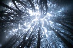 Natürlicher Hintergrund von kalten nebelhaften nebeligen Bäumen lizenzfreie stockbilder