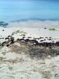 Natürlicher karibischer Strand Lizenzfreies Stockfoto